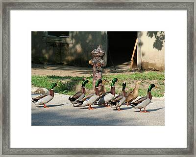 Duck And Hydrant Framed Print