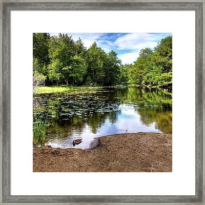 Framed Print featuring the photograph Duck At Covewood by David Patterson