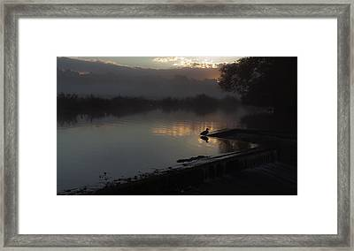 Duck At Dawn Framed Print by Ian Merton
