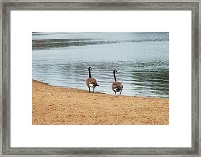 Duck By The Pond Framed Print by Nereida Slesarchik Cedeno Wilcoxon
