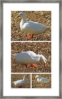 Duck Collage Mixed Media A51517 Framed Print