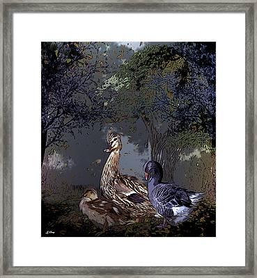 Duck Duck Goose 002 Framed Print