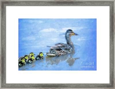 Duck Family Swim Framed Print