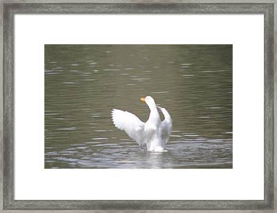 Duck Flight Framed Print by Julie Smith