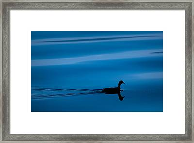 Duck Floating On A Lake Framed Print by Dane Strom