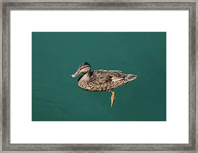 Framed Print featuring the photograph Duck Floats by Davor Zerjav