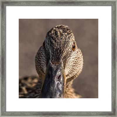 Duck Headshot Framed Print