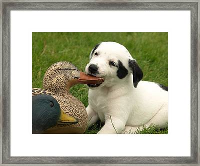 Duck Hunter Framed Print by James Peterson