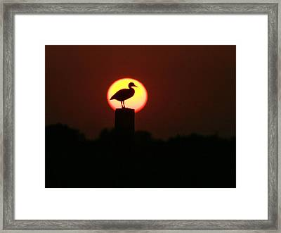 Duck On A Post Framed Print