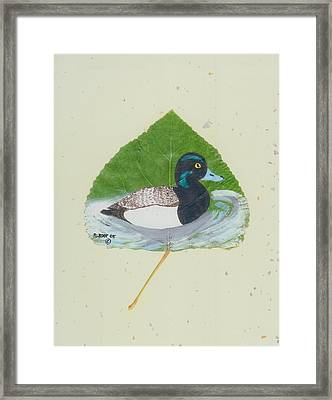 Duck On Pond #2 Framed Print