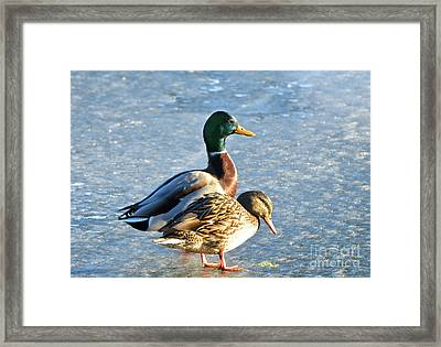 Duck Pair On Frozen Lake Framed Print