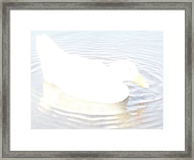 Duck Relaxing Framed Print