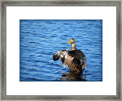 Duck Framed Print