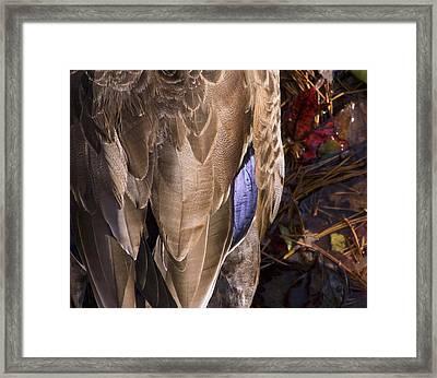 Duck Framed Print by Steve Kenney