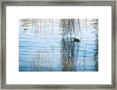 Duck Under Willow Droop Twigs Framed Print by Arletta Cwalina