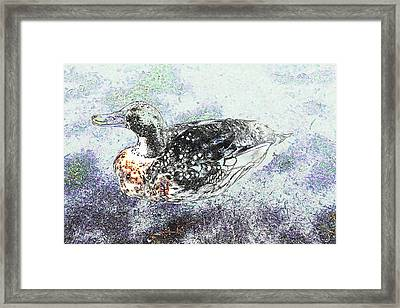Framed Print featuring the photograph Duck With Fine Plumage by Nareeta Martin
