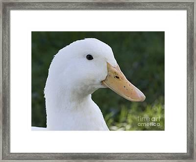 Duckie Framed Print