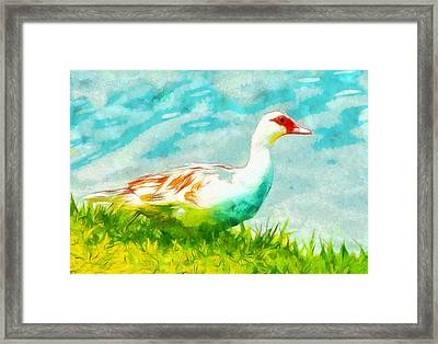 Ducking Around Framed Print