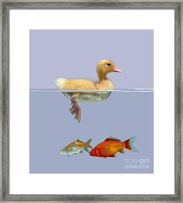 Duckling And Goldfish Framed Print by Jane Burton