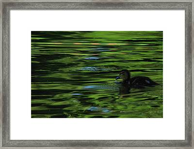 Duckling In The Sunset Framed Print by Jeff Swan