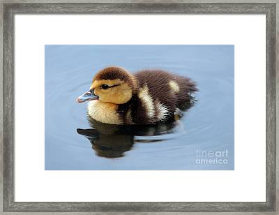 Duckling Framed Print by Jeannie Burleson