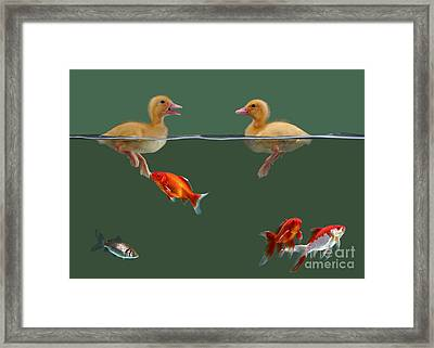 Ducklings And Goldfish Framed Print
