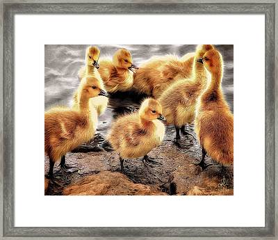 Ducklings Framed Print