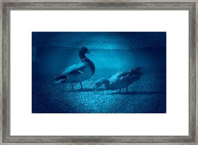 Ducks #2 Framed Print