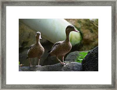 ducks - Birds 04 Framed Print by Bruce Miller