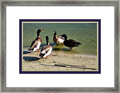 Ducks Conferencing Framed Print by Francesco Roncone