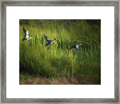Ducks Flight Framed Print