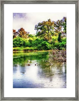 Ducks In A Pond Framed Print