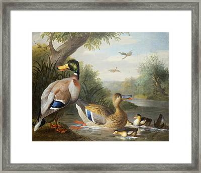Ducks In A River Landscape Framed Print by Jakob Bogdany