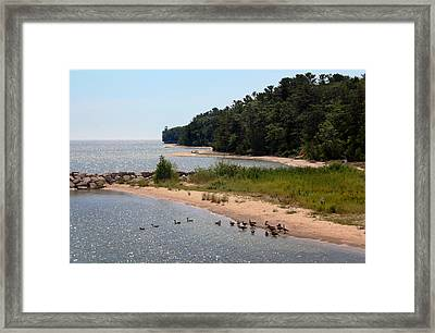 Framed Print featuring the photograph Ducks In A Row by Joanne Coyle