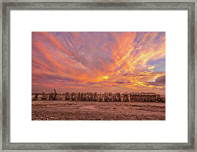 Framed Print featuring the photograph Ducks In A  Row by Peter Tellone