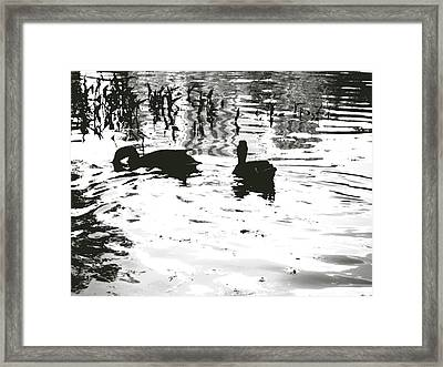 Ducks In Piedmont Park Framed Print by Utopia Concepts