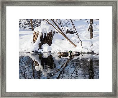 Ducks In Snow Framed Print