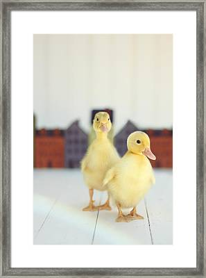 Ducks In The Neighborhood Framed Print