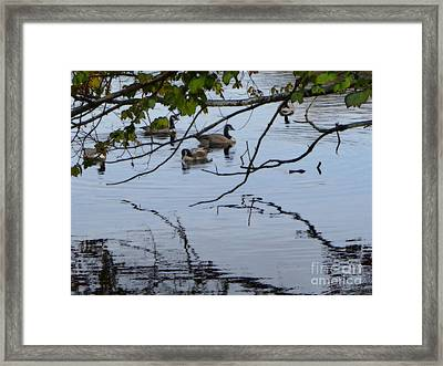 Ducks Just Being Ducks In Connetquot State Park Preserve Framed Print