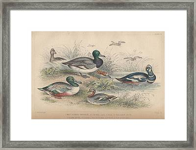 Ducks Framed Print by Rob Dreyer