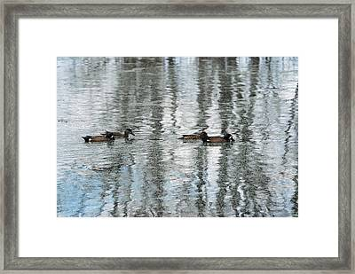 Framed Print featuring the photograph Ducks Painted By God by Teresa Blanton