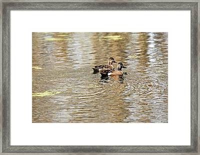 Framed Print featuring the photograph Ducks Together by Teresa Blanton