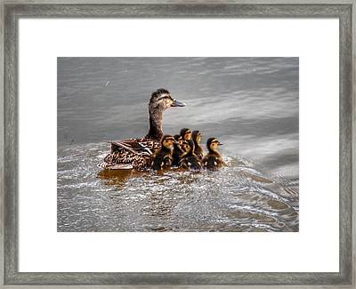 Ducky Daycare Framed Print