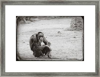 Framed Print featuring the photograph Dude by Sandy Adams