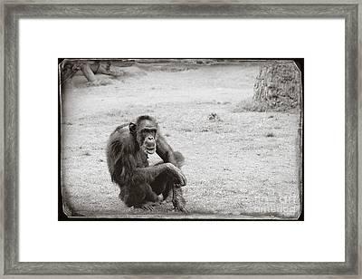 Dude Framed Print by Sandy Adams