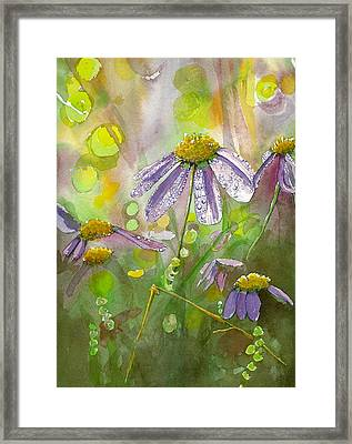 Due Today Z - Dew To Daisy Framed Print