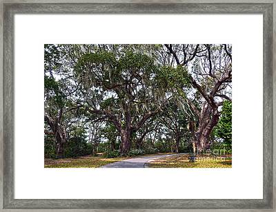 Dueling Cannon Oaks Framed Print by Catherine Sherman