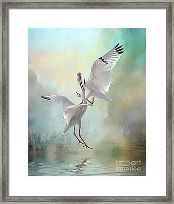 Duelling White Ibises Framed Print