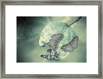 Duet Framed Print by Jimmy Hoffman