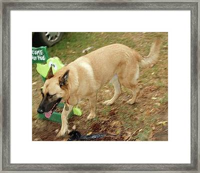 Duke Framed Print by Jerry Battle